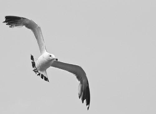 Berada di tepi danau kebanyakan adalah jenis burung burung camar